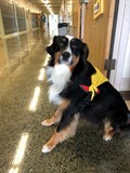 Atlas the Therapy Dog