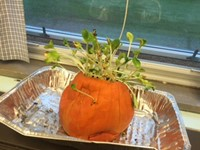 Our prize winning pumpkin from our STEM challenge.